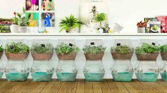 dekoratif-bitkiler